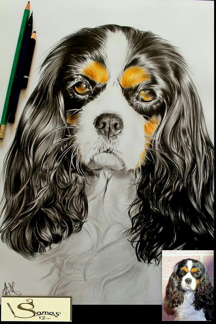 Portrait Chien Au Crayon Dessin Realistic Drawing Www Samos17