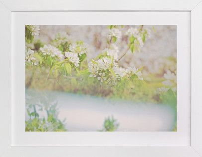divergent blossoms II