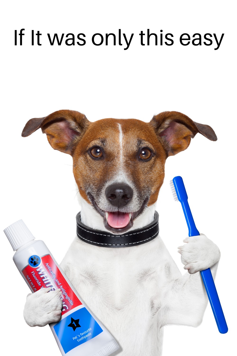 Pin on Dog Teeth Cleaning