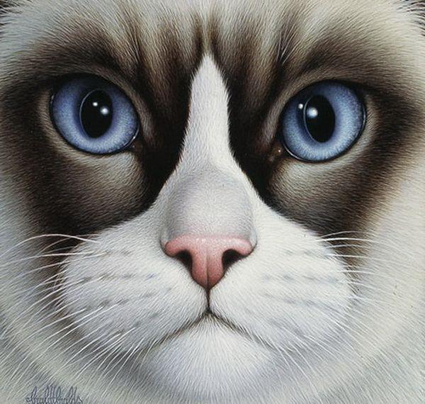 Прикольная морда кота рисунок, клипарты рамки