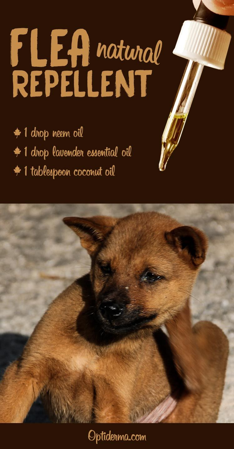 What Are the Best Essential Oils for Fleas? (+ Practical Tips for Dogs & Cats)