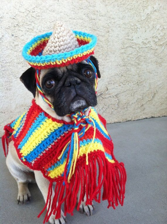 Pin By Natural Sophisticate On I Really Like This Pet Costumes