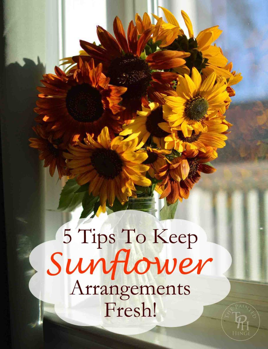 5 Tips On How To Keep Sunflowers Alive And Fresh | Sunflowers and ...