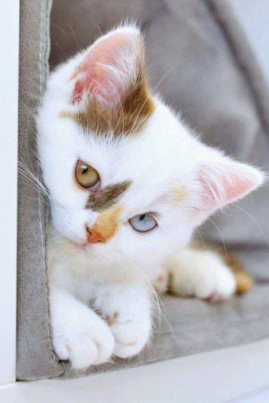 Пушистое чудо: Фотографий удивительной красоты котов со всего мира