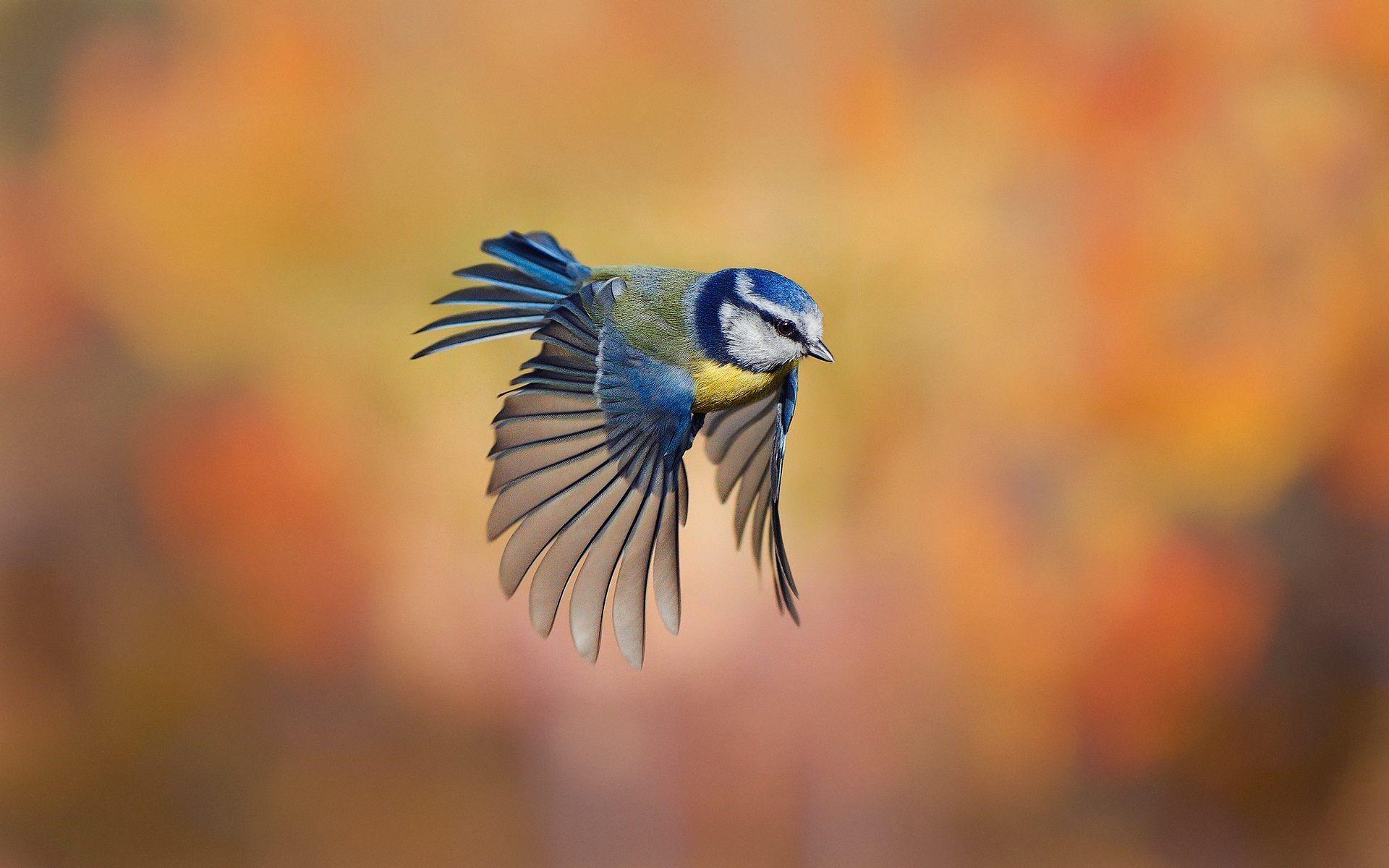 Flying Birds Desktop Wallpapers Fliegende Vogel Hintergrund Vogel Bilder