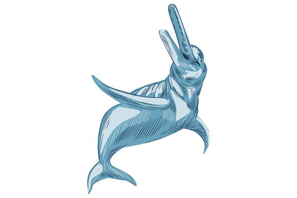 Amazon River Dolphin Drawing Creativework247 Dolphin Drawing