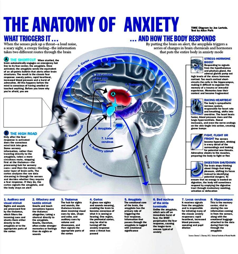 Anatomy Of Anxiety Diagram - All Kind Of Wiring Diagrams •
