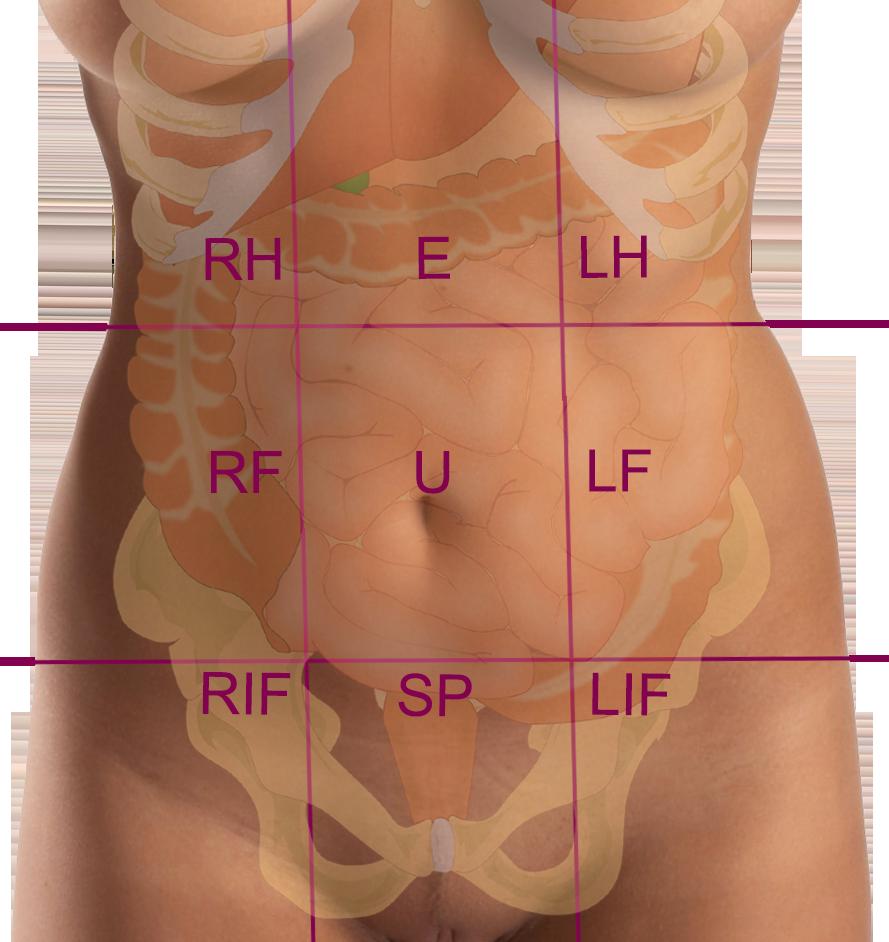 9 zones of the abdomen: RH: Right hypochondrium, E: Epigastrium, LH ...