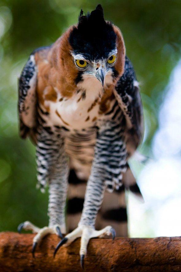 Amazon Rainforest Animals And Plants Of Tropical Amazonia