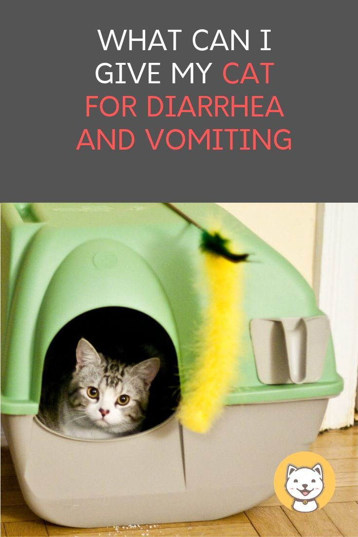 What Can I Give My Cat For Diarrhea And Vomiting Kitty Cats Blog Cat Throwing Up Sick Kitten Cat Stuff Products
