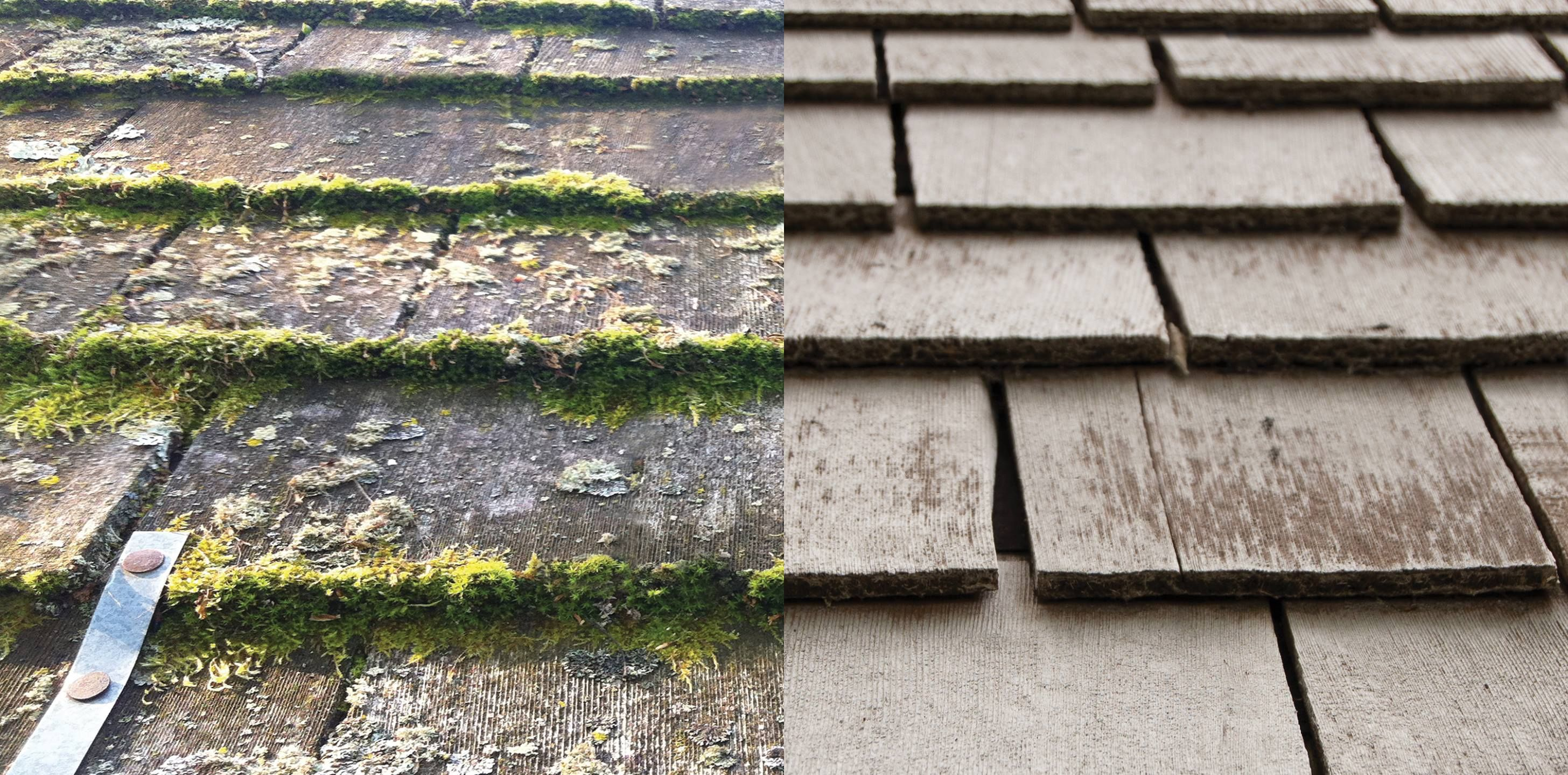 Fan Of The Month Larry Wiped Out Moss Lichen On His Roof Outdoor Outdoor Cleaning Diy Mold Remover