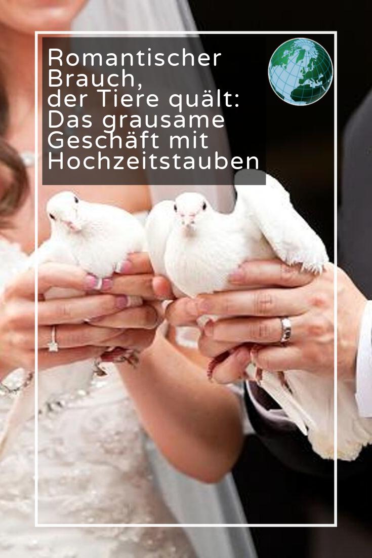Romantischer Brauch Der Tiere Qualt Das Grausame Geschaft Mit Hochzeitstauben Hochzeitstauben Tiere Grausam