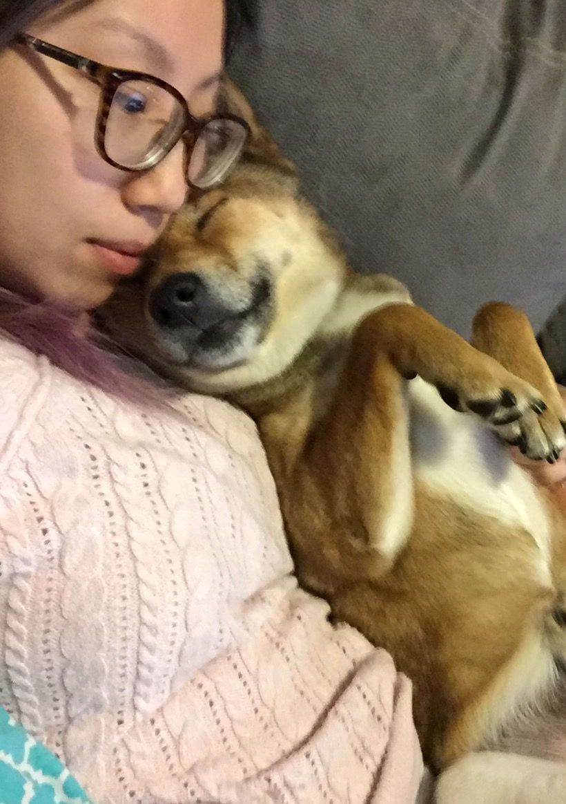 Shiba cuddles are the best!