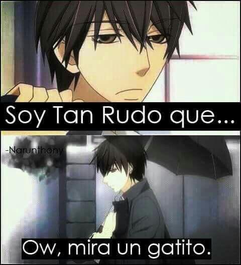 Los Gatitosson El Problema Xd Meme De Anime Frases Del