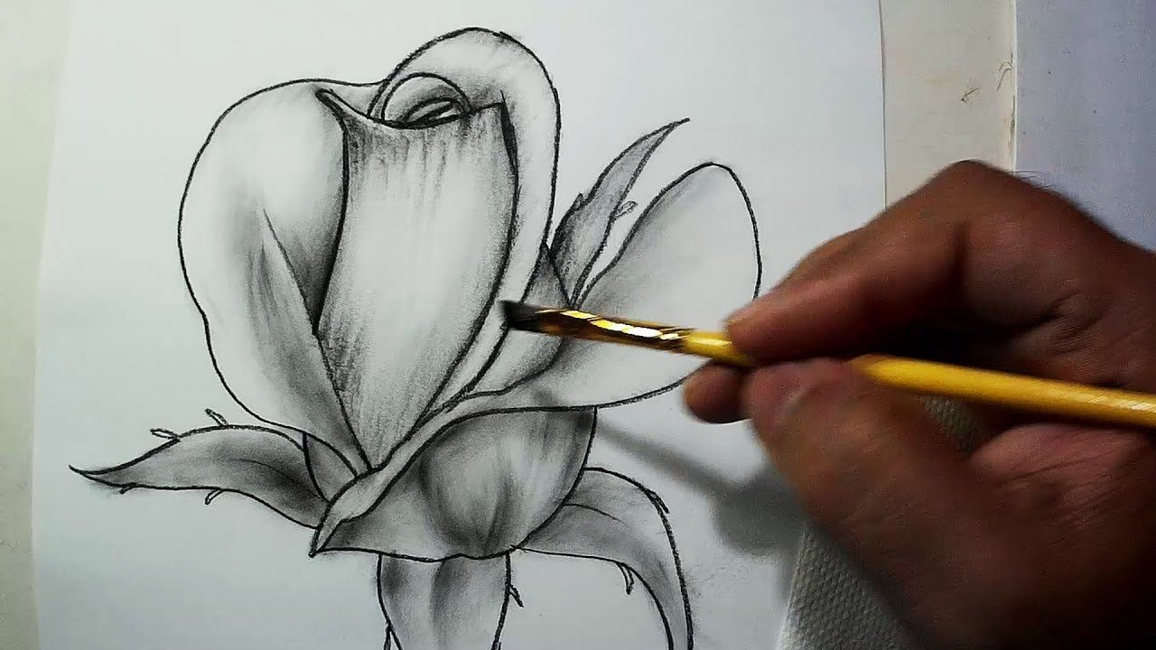 How To Draw A Rose Easy Sketch Draw Shade In 2019