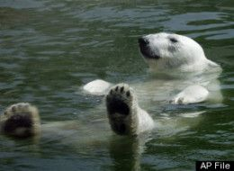CLIMATE CHANGE has had such a dramatic impact on polar bear populations that our children could be the last generation to see polar bears on U.S. shores.