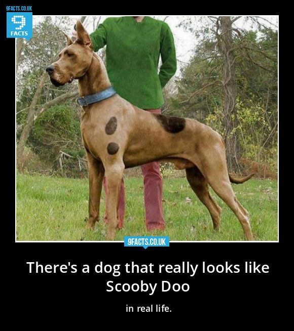 What Would Scooby Doo Look Like In Real Life Google Search Dog