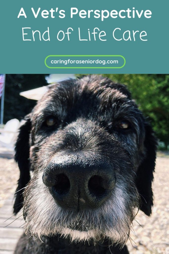 End of Life Care A Veterinarian's Perspective Dog care