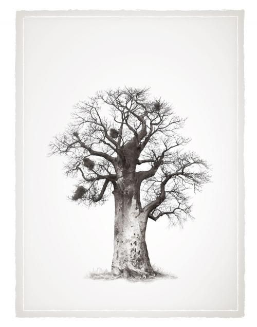baobab tree klaus tiedge legacy baobab series landscape pinterest tattoo and drawings. Black Bedroom Furniture Sets. Home Design Ideas