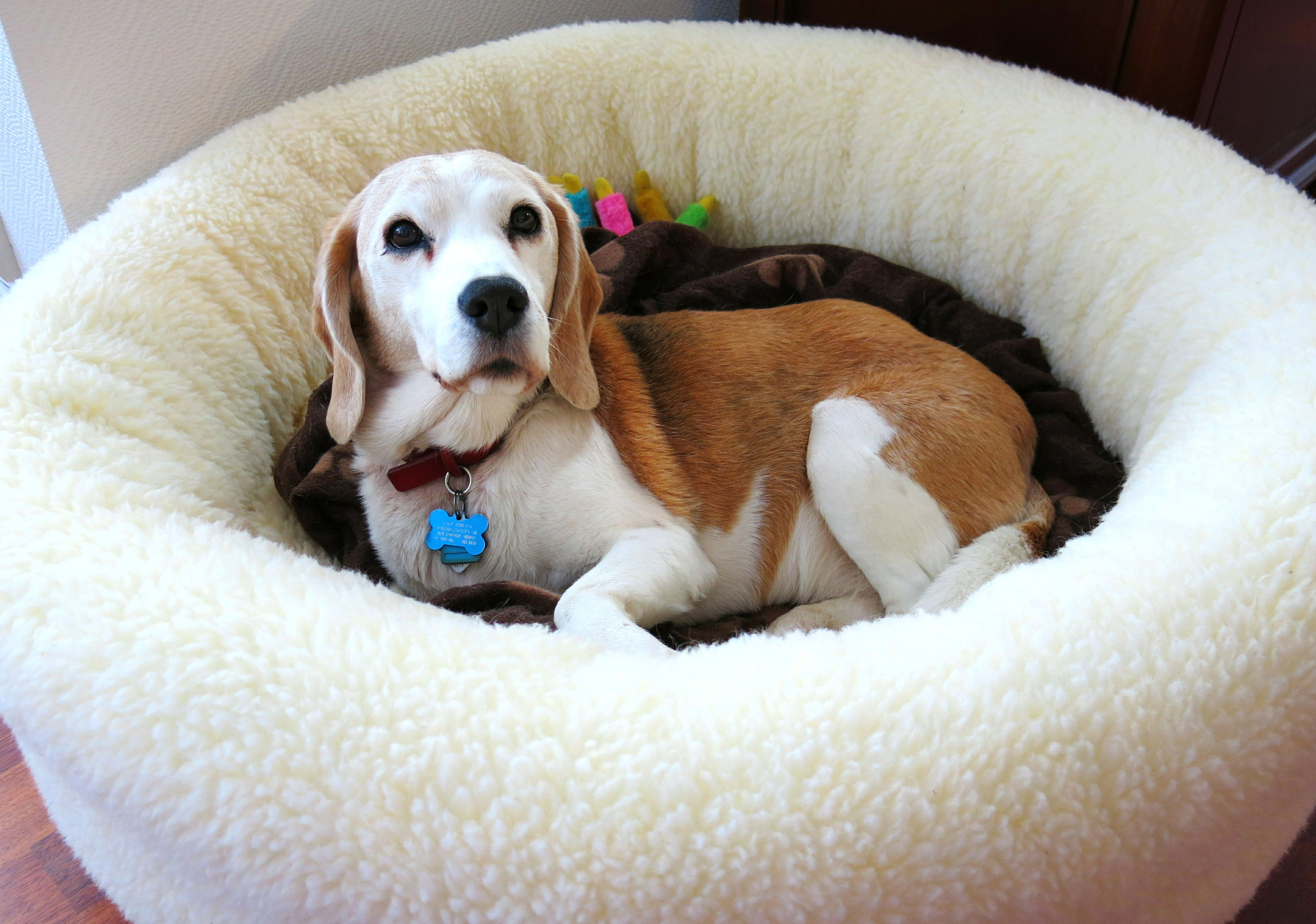 Our friend, Lily, moved all the way to Norway and we still got her bed there!  One lucky dog (: #dogs #petbeds