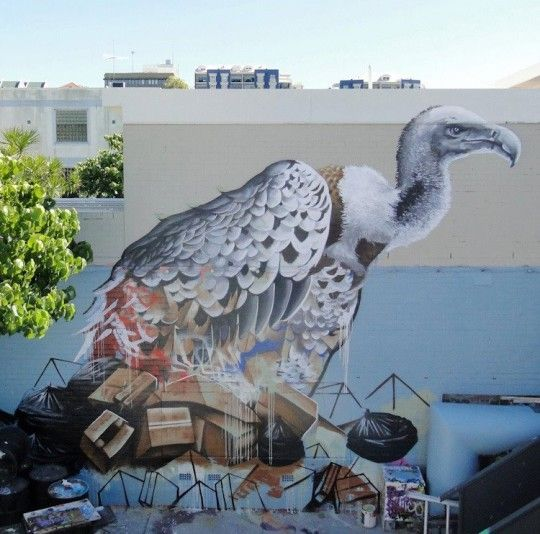 Fintan Magee in Brisbane
