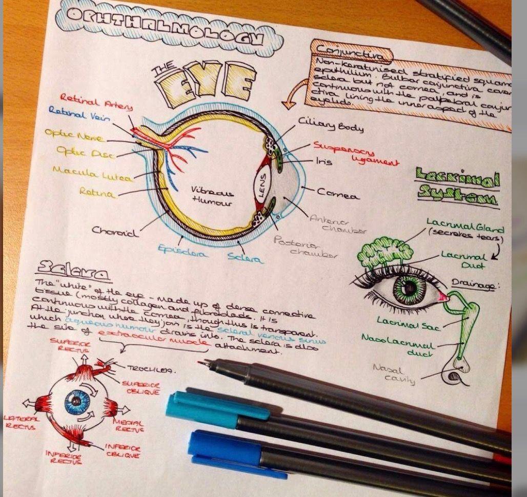 Pin by Sabrina Barba on SCHOOL   Pinterest   Anatomy, School and ...