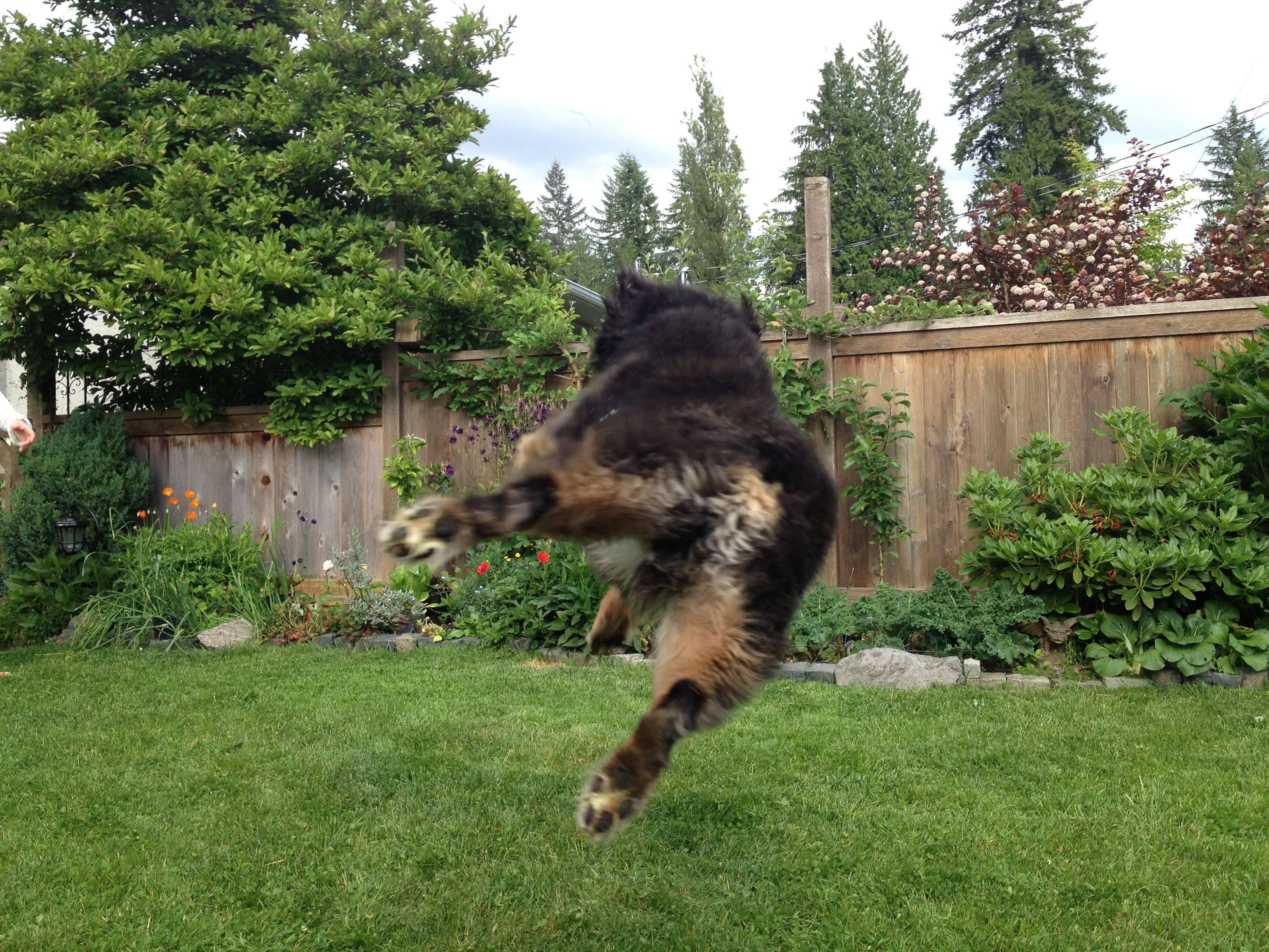 a Frisbee crazed dog