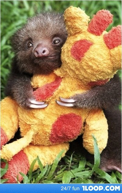 A baby sloth hugging his stuffed giraffe