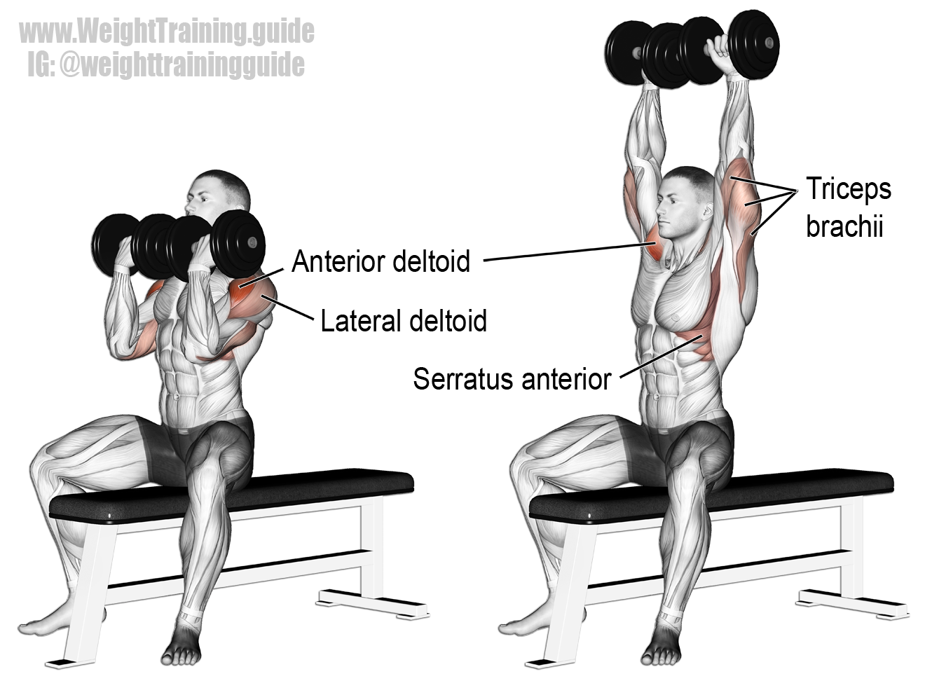 Arnold Press Exercise Instructions And Video
