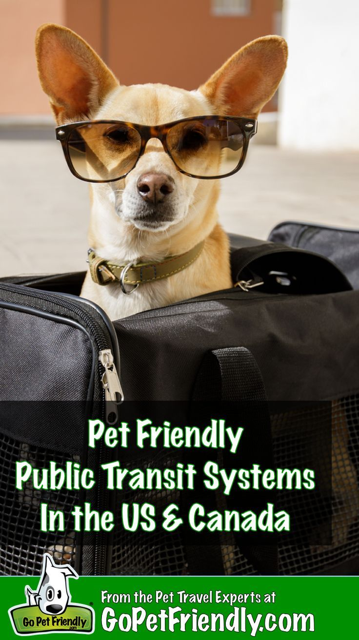 Pet Friendly Public Transportation In The Us And Canada Pet Travel Dog Friendly Cities Dog Travel