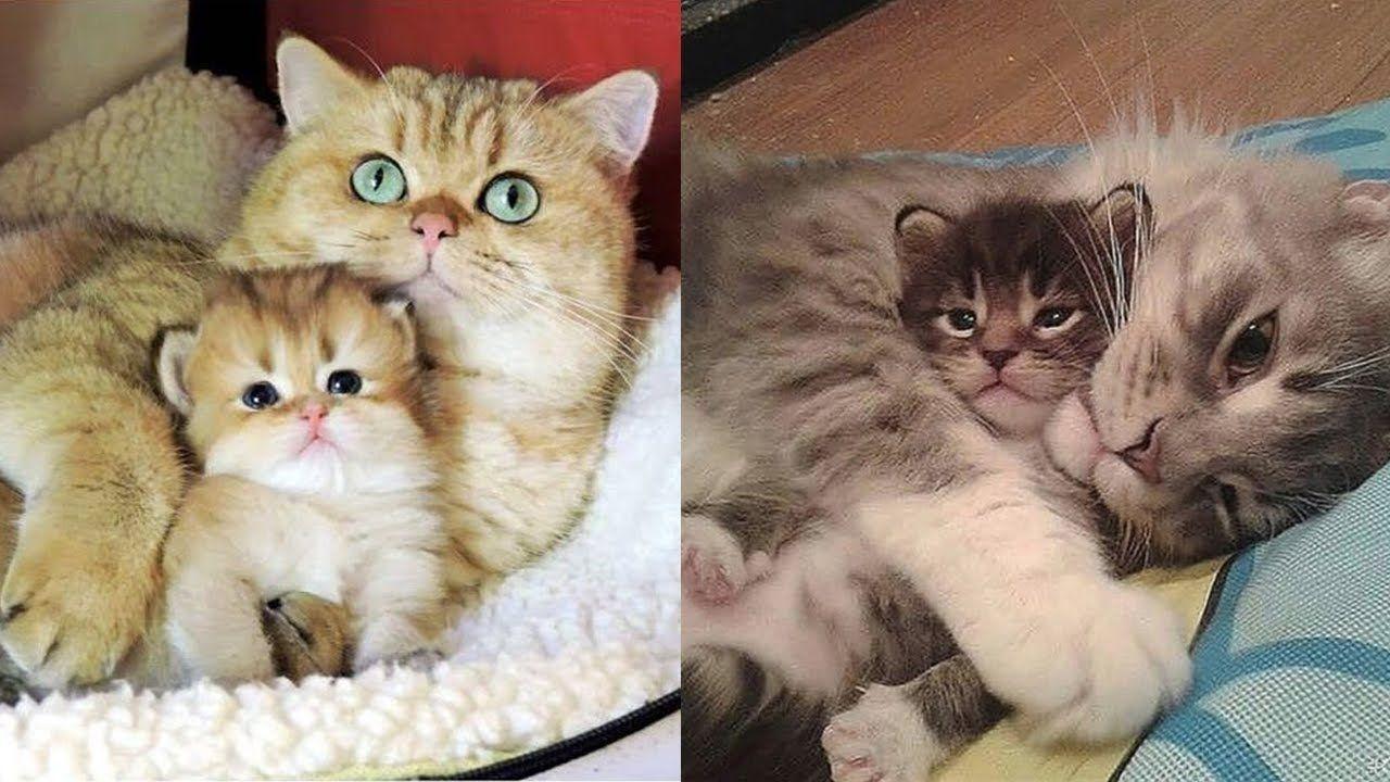 Mother Cats Protecting Their Cute Kittens Mom Cat Loves Kittens Compilation 2020 3 Https Www Youtube Com Watch V N Xn In 2020 Kitten Mom Kittens Cutest Cat Mom