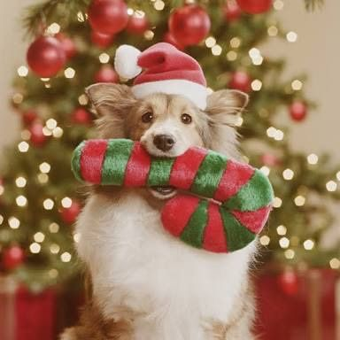 Merry Christmas Dog And Cat Pictures