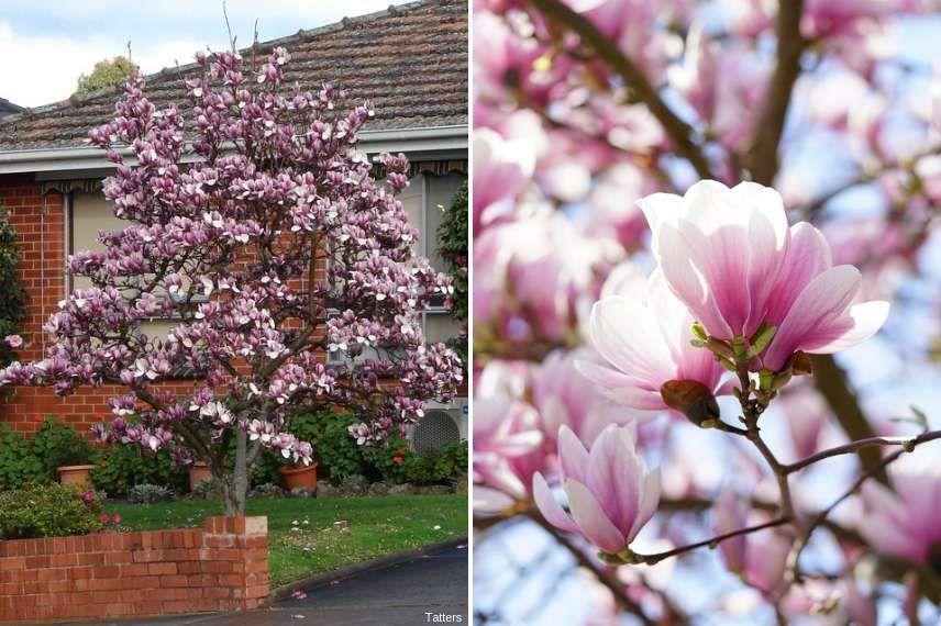7 Arbres Parfaits En Petit Jardin Arbres Pour Petit Jardin Deco Petit Jardin Jardins
