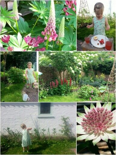 Our garden early summer- first proper year for our gallica roses to try their new home. Lupine and astrantia in full glory. First year our lovely Brem takes her first gardening steps!