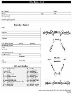 Feline Dental Chart/Form   Vet clinic   Pinterest