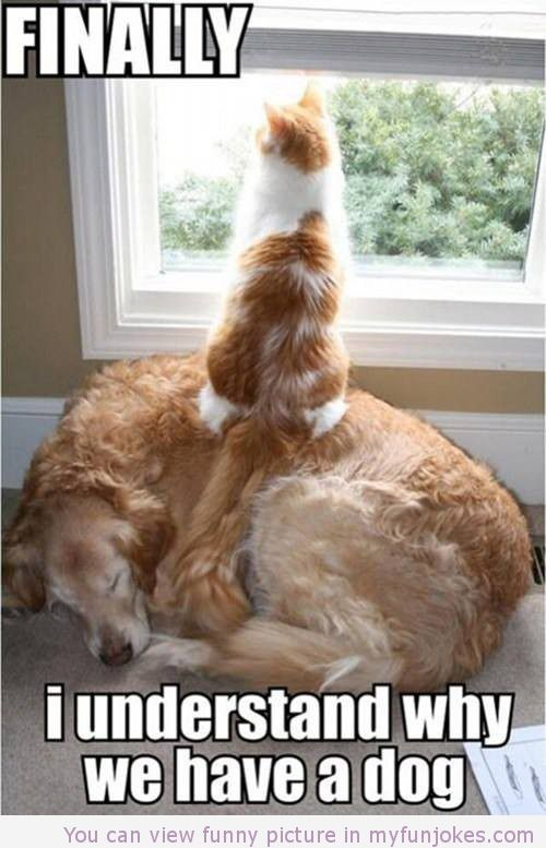 Funny Dog And Cat Picture Really Funny Jokes For Kids Http