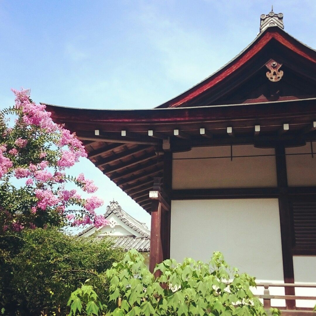 A summer in Kyoto, Japan.  日本  โตเกียว  เกียวโต  京