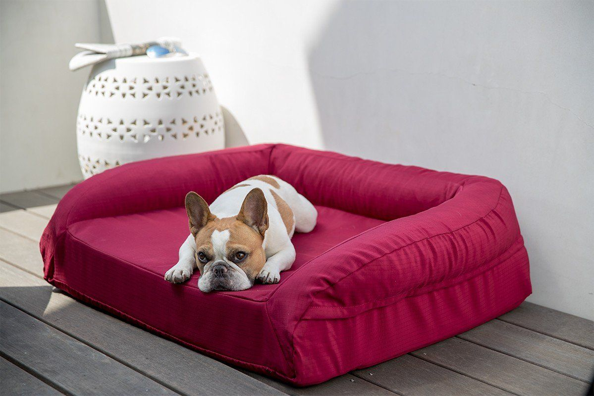 Tough Bolstered ChewResistant Orthopedic Dog Bed Chew