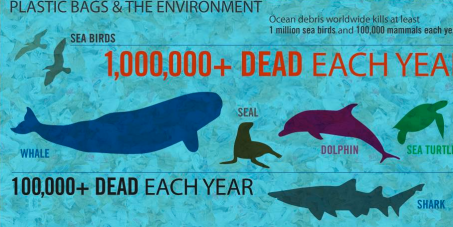An Estimated 500 Billion To 1 Trillion Plastic Bags Are Used