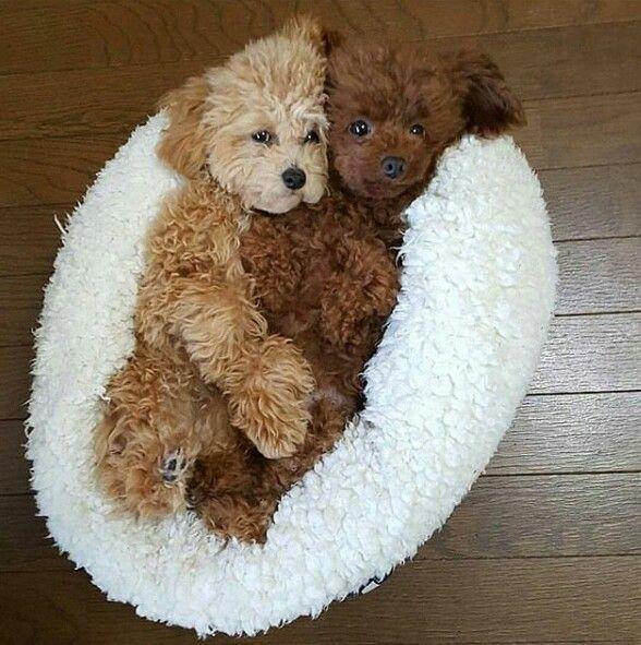 Aawwwww They Look Like Two Teddy Bears Cuddling  Cute -2976