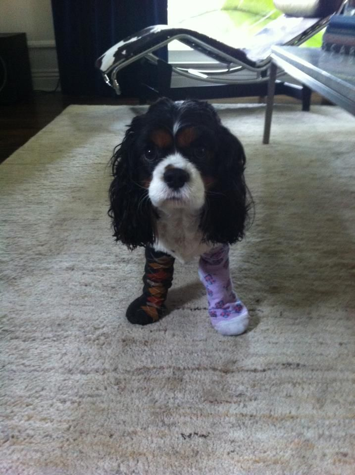 Ok ok , my socks don't match, I get it, I am a dog and color-blind! you have a problem with that?  do you want to take this outside buddy?
