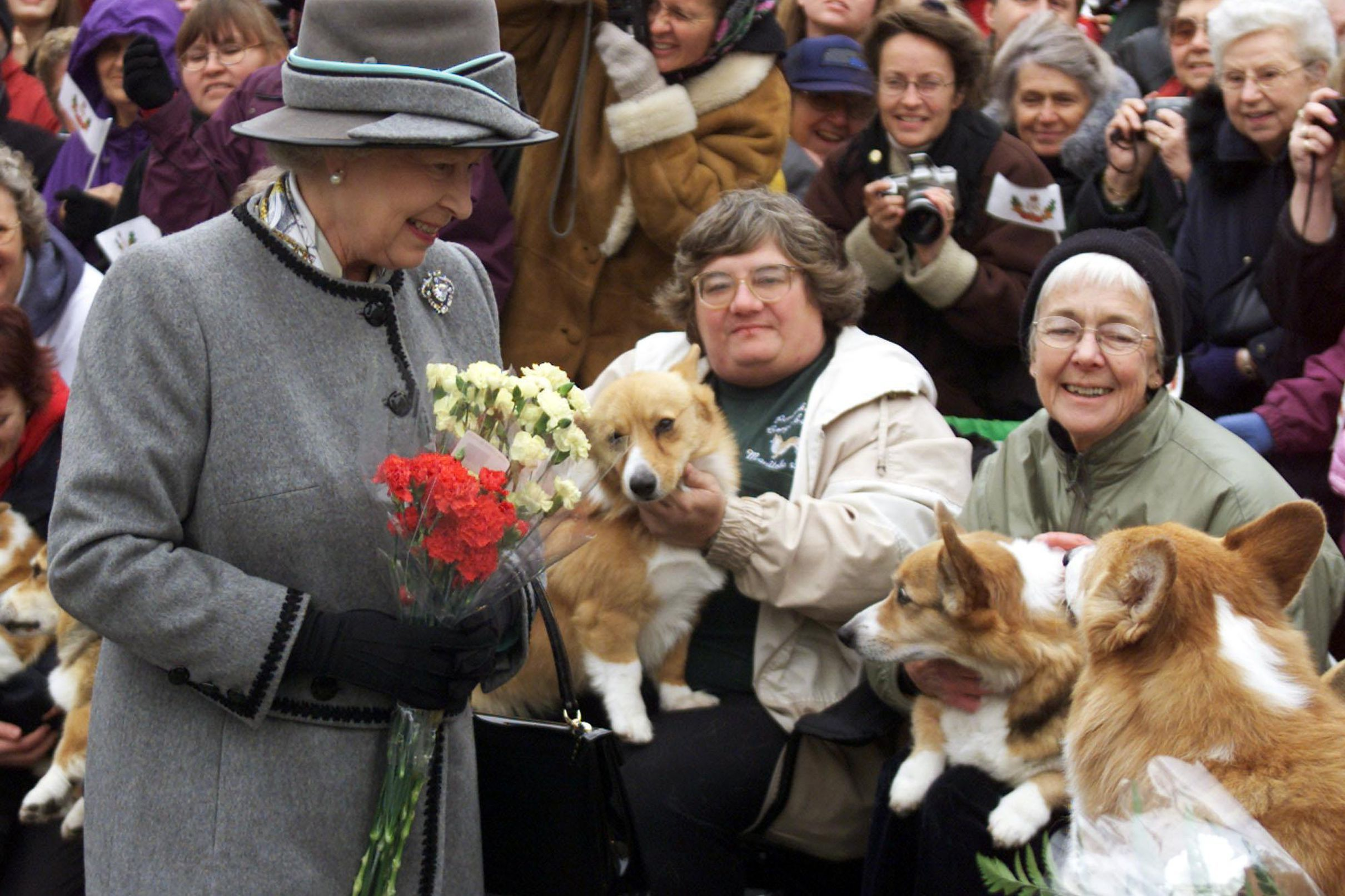 90 Years Of Queen Elizabeth Looking Lovingly At Corgis Whinny