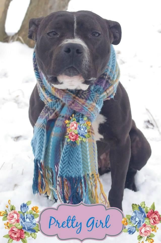 Adopt 81 Pretty Girl 1 Adopted On Dog Pounds Adoption Big Dogs