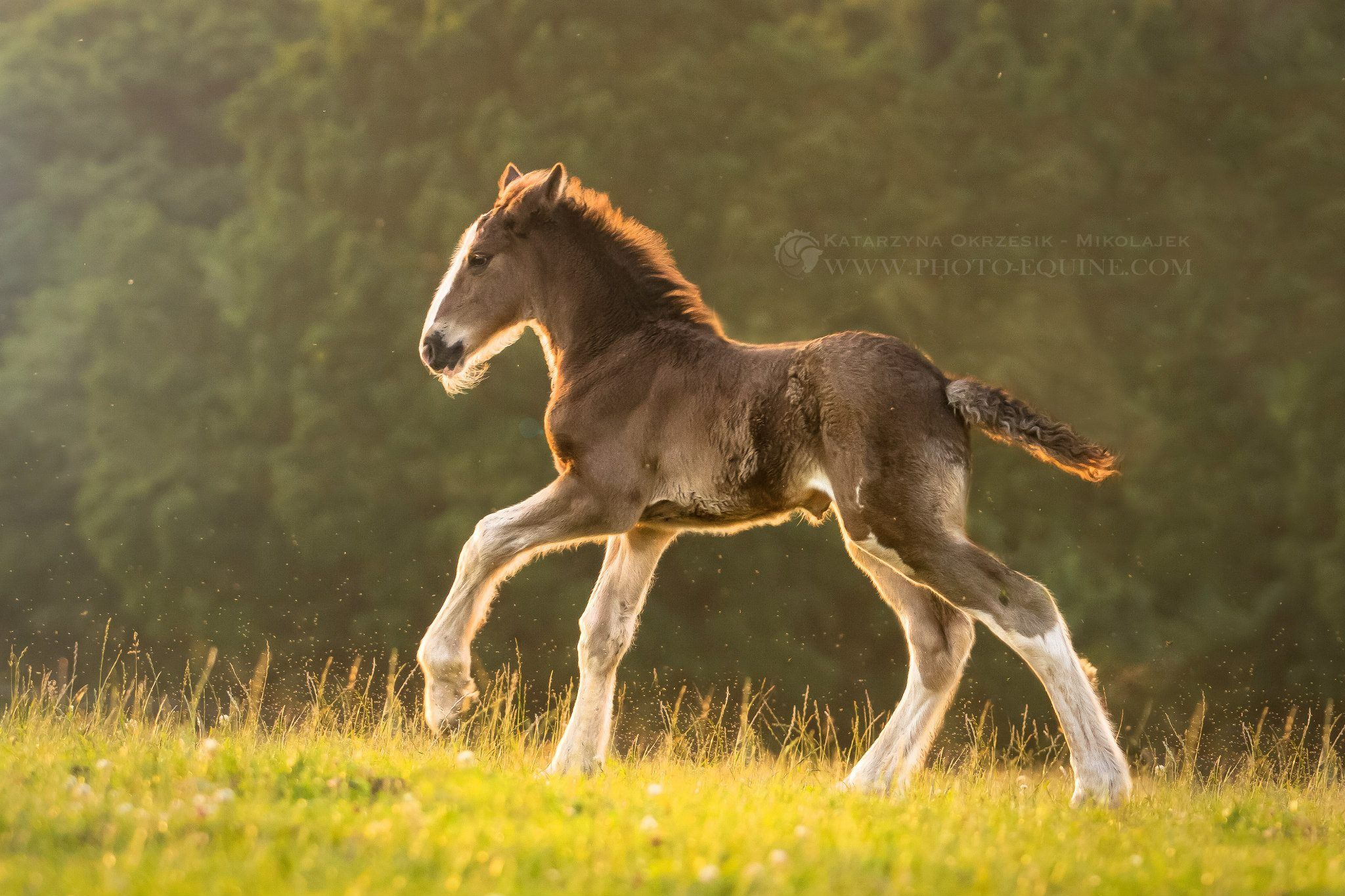 I Let Pancake Out In The Field She Loved It She Is Such A Sweet Foal Harley Horses Big Horses Pretty Horses [ 1365 x 2048 Pixel ]