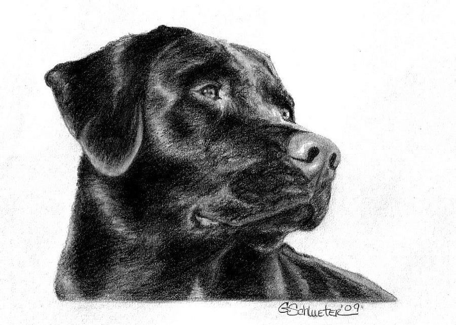 The Black Lab Sketch By Genevieve Schlueter Dog Sketch Custom