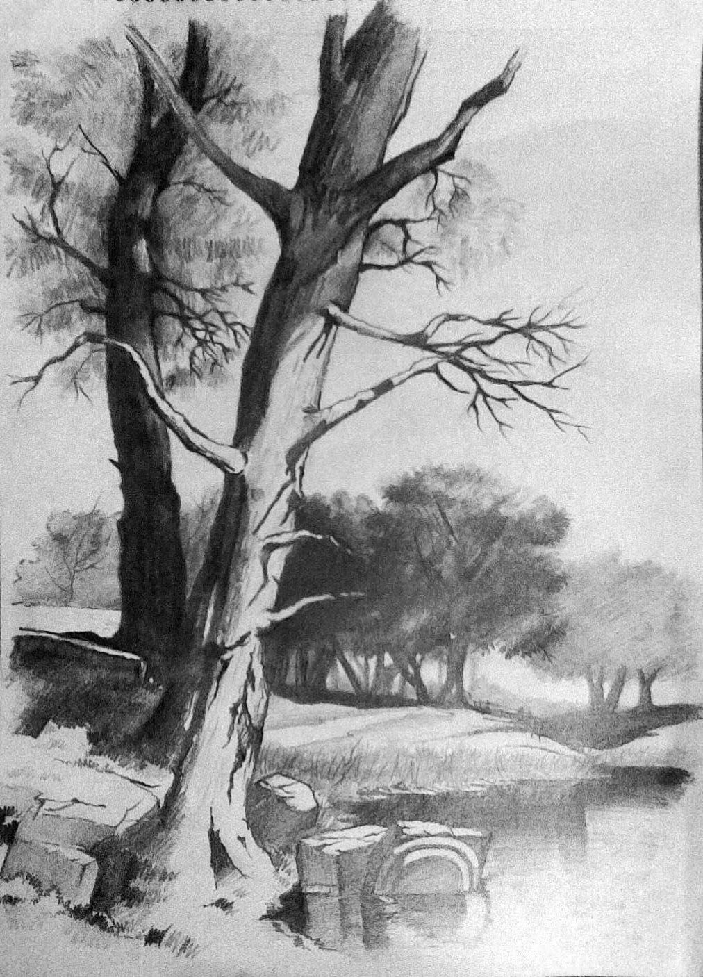 Two Trees Landscape Drawings In Pencil