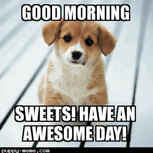 Good Morning Pup Have An Awesome Day