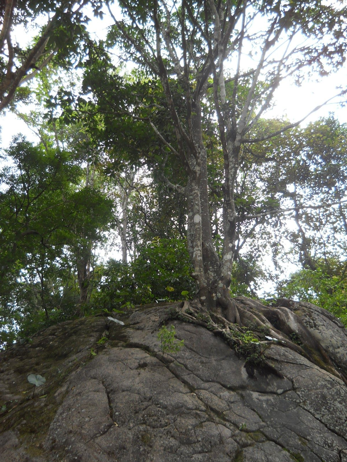 Shot from wayanad (With images) Honeymoon resorts
