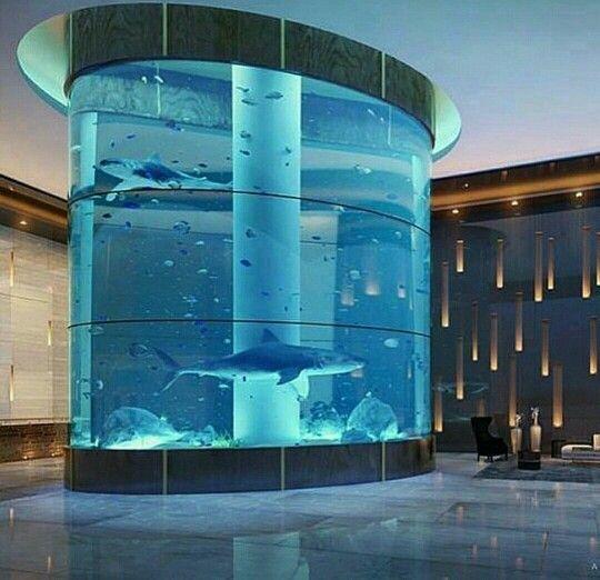Indoor Shark Tank...I Love It