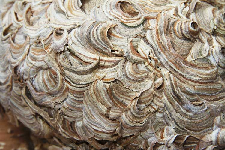 1000  images about Wasp Nest on Pinterest | Wasp nest, Wasp and ...